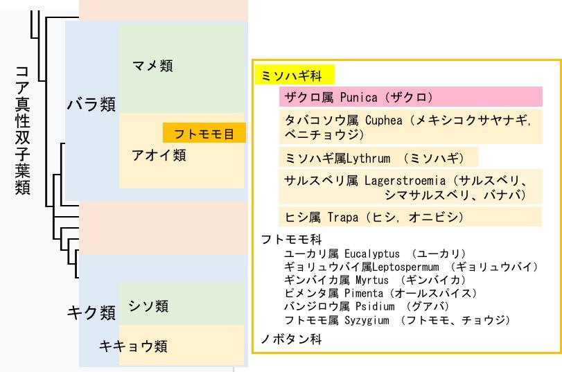 f:id:yachikusakusaki:20180409002211j:plain