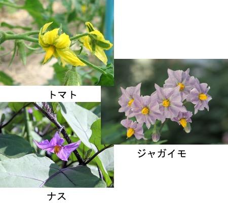 f:id:yachikusakusaki:20180412025723j:plain