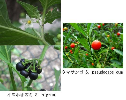 f:id:yachikusakusaki:20180415033952j:plain