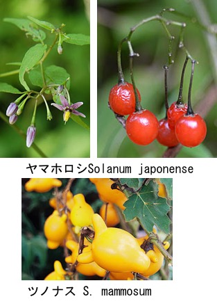 f:id:yachikusakusaki:20180415034009j:plain