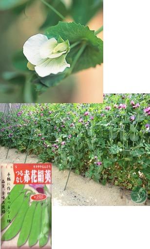 f:id:yachikusakusaki:20180419013238j:plain