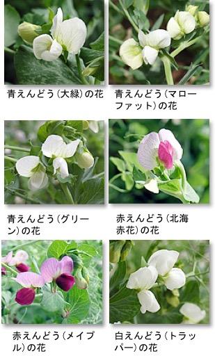 f:id:yachikusakusaki:20180419025813j:plain