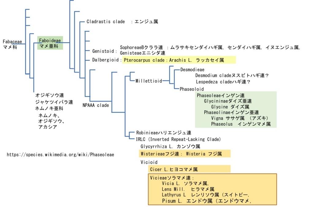 f:id:yachikusakusaki:20180419030436j:plain