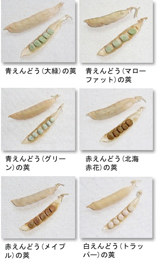 f:id:yachikusakusaki:20180419031912j:plain