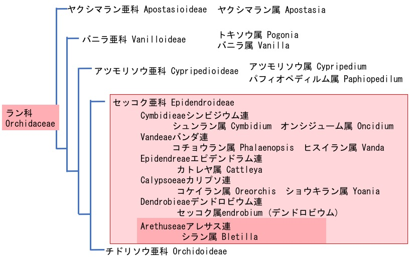 f:id:yachikusakusaki:20180425005842j:plain