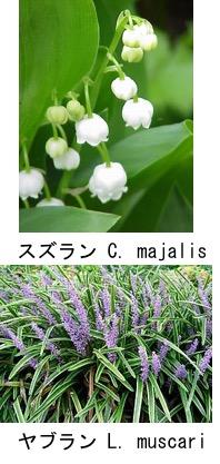f:id:yachikusakusaki:20180425010626j:plain