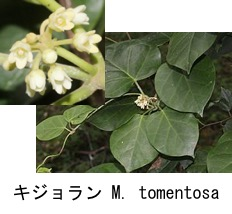 f:id:yachikusakusaki:20180425010832j:plain