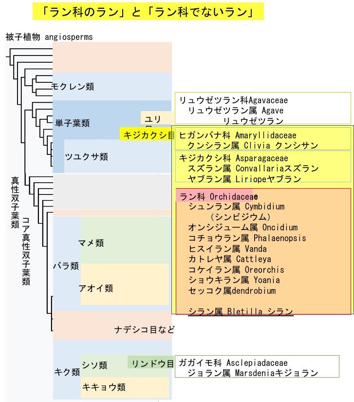f:id:yachikusakusaki:20180425024723j:plain