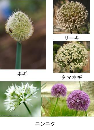 f:id:yachikusakusaki:20180426005433j:plain