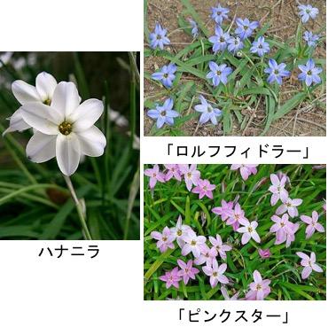 f:id:yachikusakusaki:20180426012732j:plain