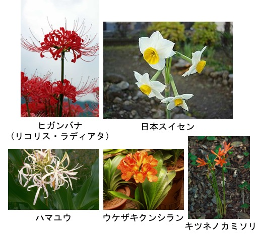 f:id:yachikusakusaki:20180426013847j:plain