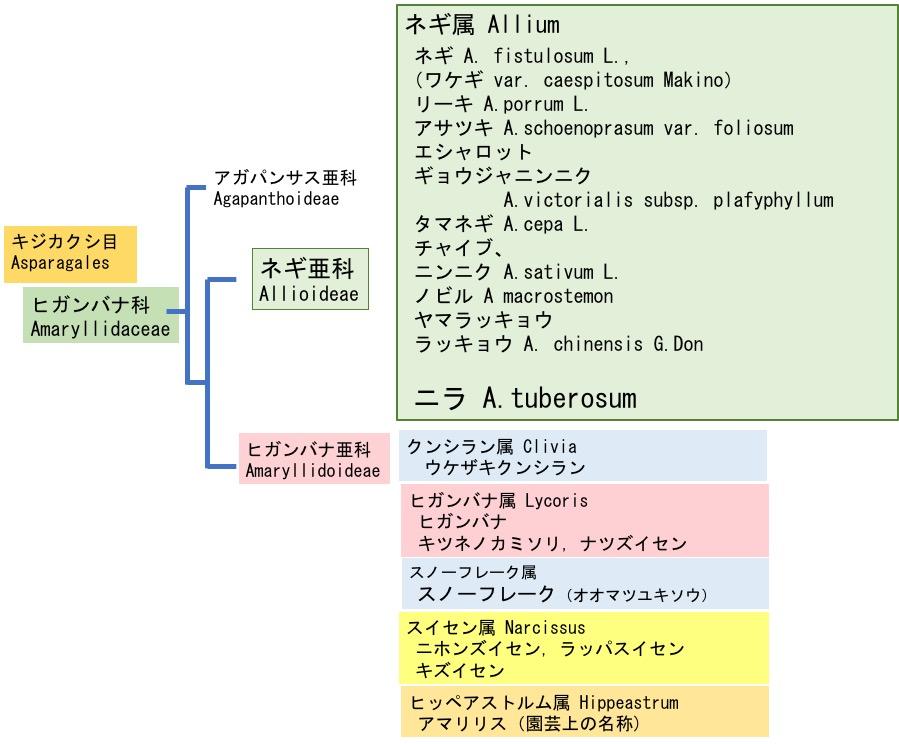 f:id:yachikusakusaki:20180426021714j:plain
