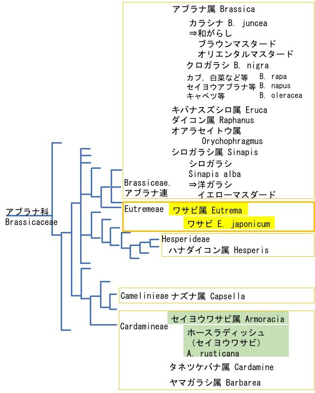 f:id:yachikusakusaki:20180504031741j:plain