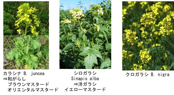 f:id:yachikusakusaki:20180505031731j:plain