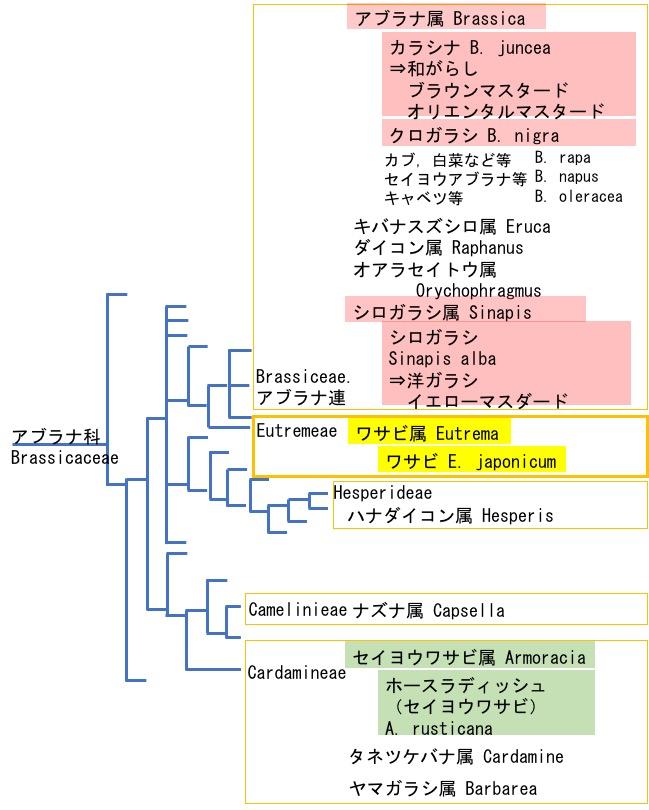 f:id:yachikusakusaki:20180505031746j:plain