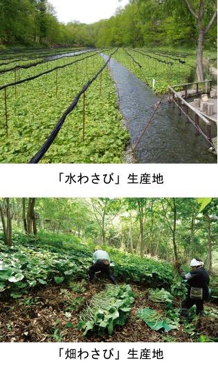 f:id:yachikusakusaki:20180506171848j:plain