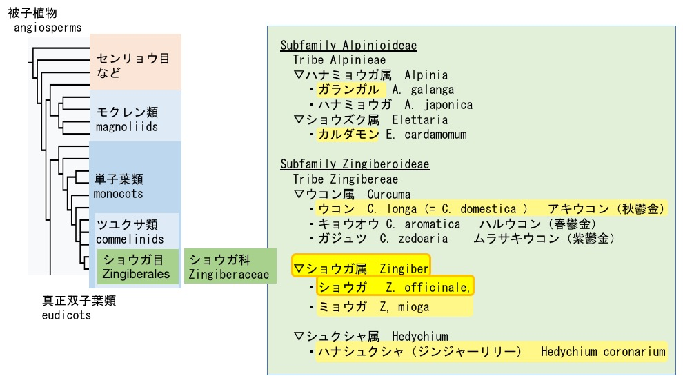 f:id:yachikusakusaki:20180514223523j:plain