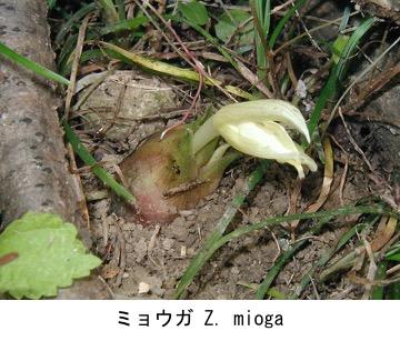 f:id:yachikusakusaki:20180514224646j:plain