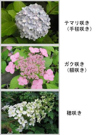 f:id:yachikusakusaki:20180520003836j:plain