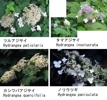 f:id:yachikusakusaki:20180520004600j:plain