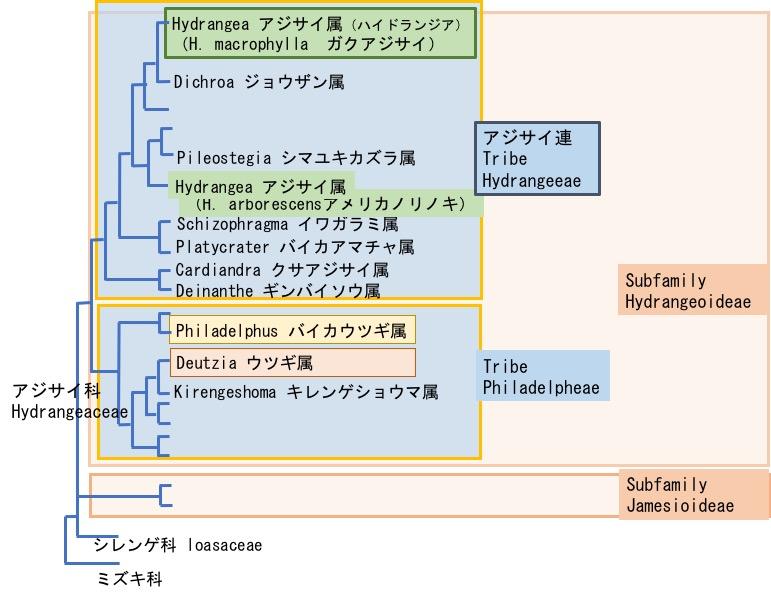 f:id:yachikusakusaki:20180520171451j:plain