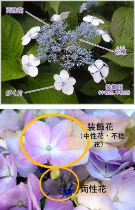 f:id:yachikusakusaki:20180520184353j:plain