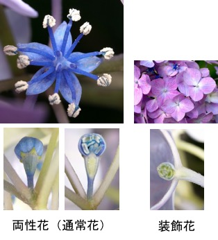 f:id:yachikusakusaki:20180520204330j:plain