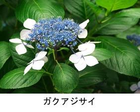 f:id:yachikusakusaki:20180522011246j:plain