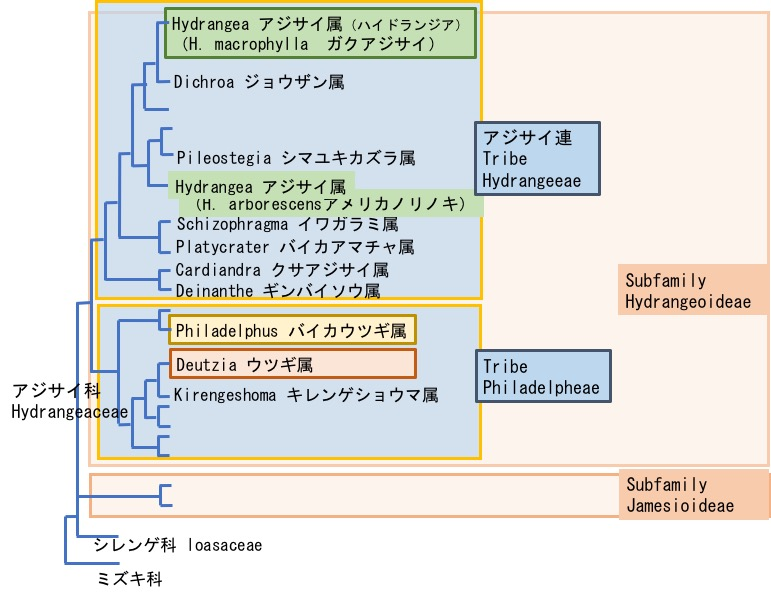 f:id:yachikusakusaki:20180523214405j:plain