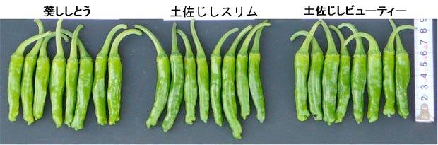 f:id:yachikusakusaki:20180530020717j:plain