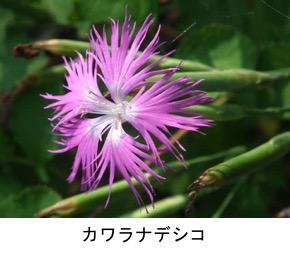 f:id:yachikusakusaki:20180602002926j:plain