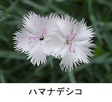 f:id:yachikusakusaki:20180602010749j:plain