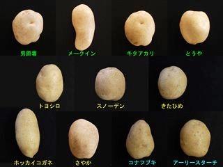 f:id:yachikusakusaki:20180711035038j:plain