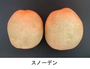 f:id:yachikusakusaki:20180712030144j:plain