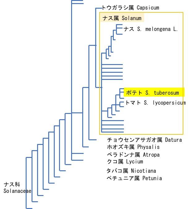 f:id:yachikusakusaki:20180715210738j:plain