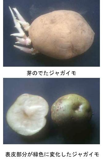 f:id:yachikusakusaki:20180716013948j:plain