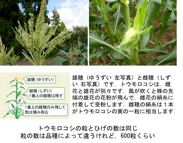f:id:yachikusakusaki:20180721033040j:plain