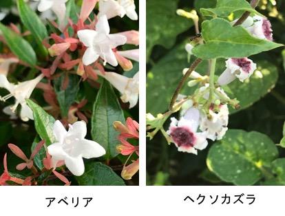 f:id:yachikusakusaki:20180819011900j:plain