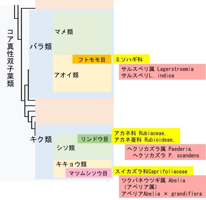 f:id:yachikusakusaki:20180819011914j:plain