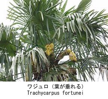 f:id:yachikusakusaki:20180908234937j:plain