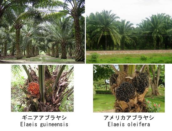 f:id:yachikusakusaki:20180908235114j:plain