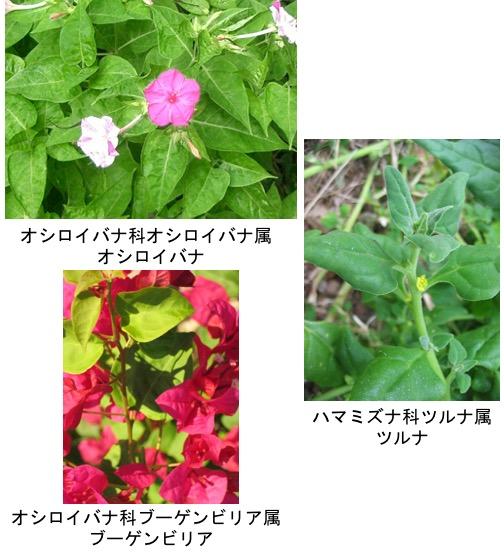 f:id:yachikusakusaki:20180915231040j:plain