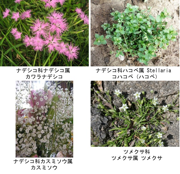 f:id:yachikusakusaki:20180915231126j:plain