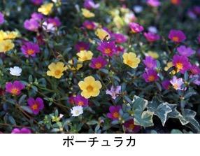 f:id:yachikusakusaki:20180917002658j:plain