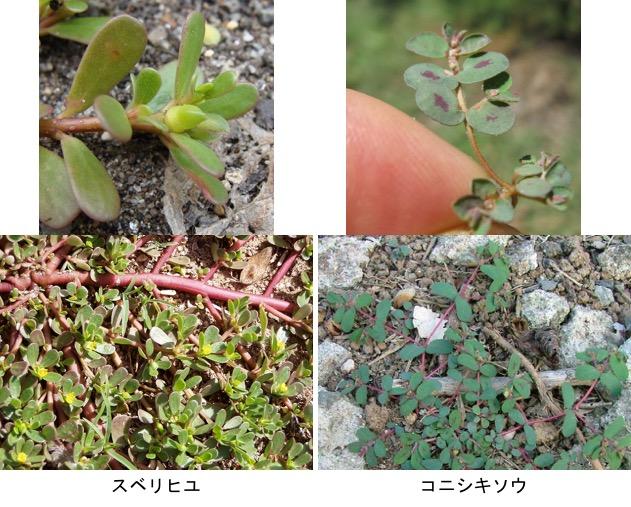 f:id:yachikusakusaki:20180917221800j:plain