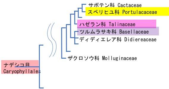 f:id:yachikusakusaki:20180929000929j:plain