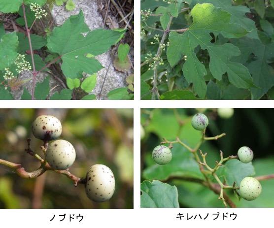 f:id:yachikusakusaki:20181010005322j:plain