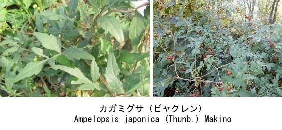 f:id:yachikusakusaki:20181010005541j:plain