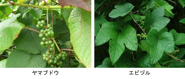 f:id:yachikusakusaki:20181010011553j:plain