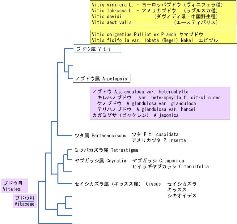 f:id:yachikusakusaki:20181010103021j:plain